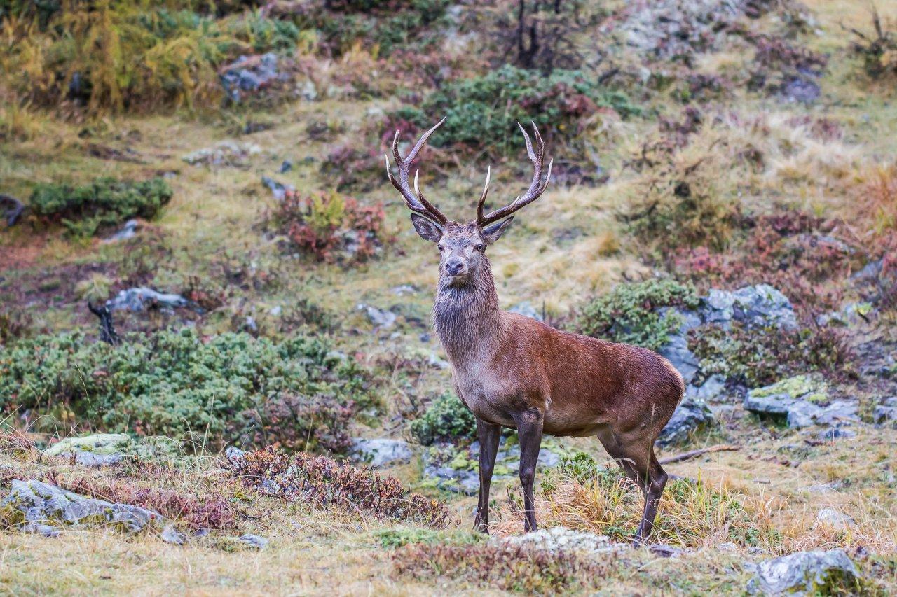 Beobachtung von Freiwild