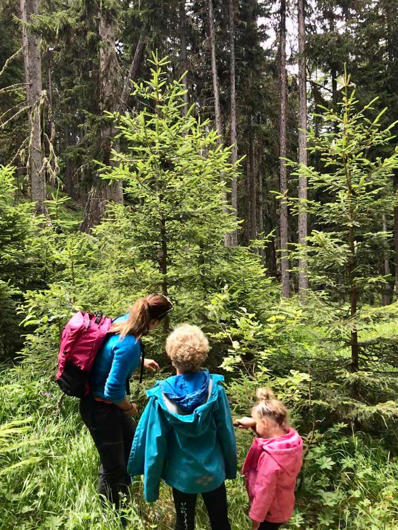 À la découverte de nos forêts
