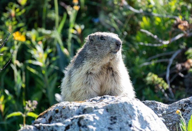 Fauna und Flora im Val des Dix