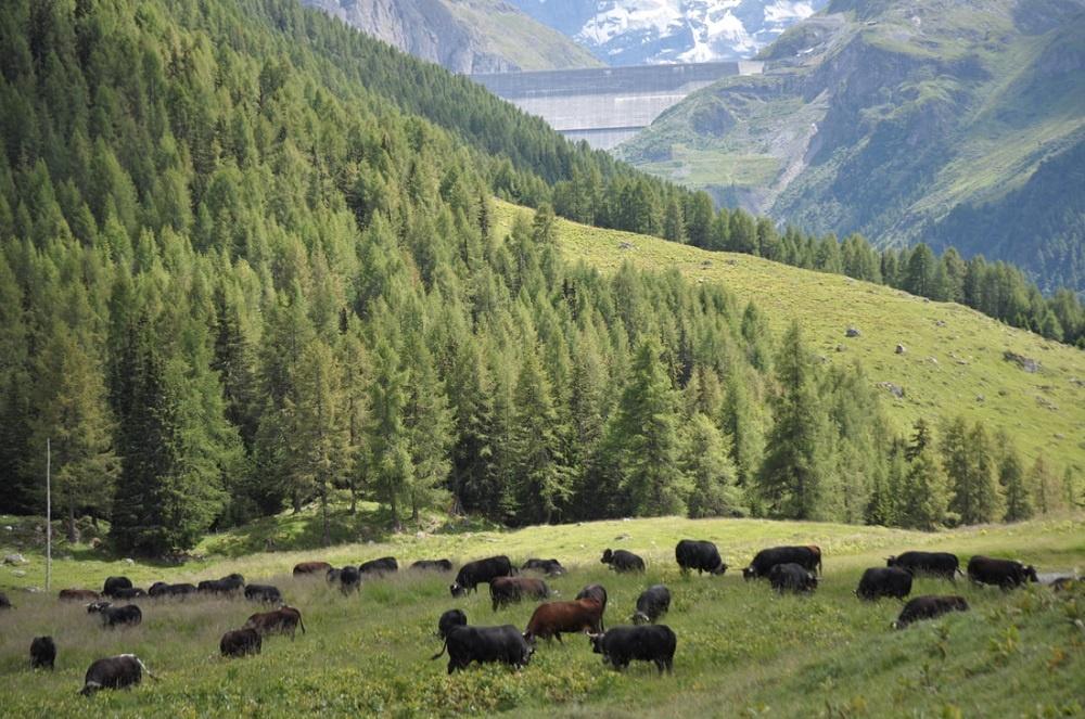Chemeuille - Alpage de Mandelon