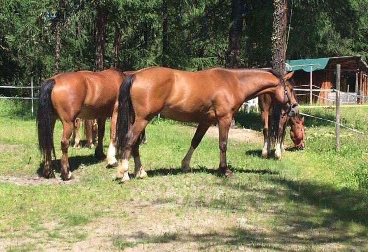 Balade à cheval -  Ranch Le Caribou