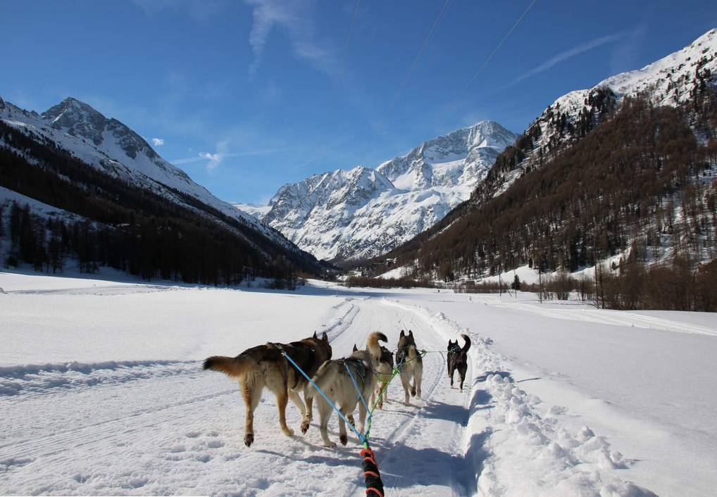 Introduction to sled dogs