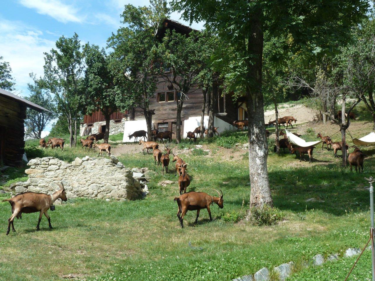 Agritourisme à Ossona