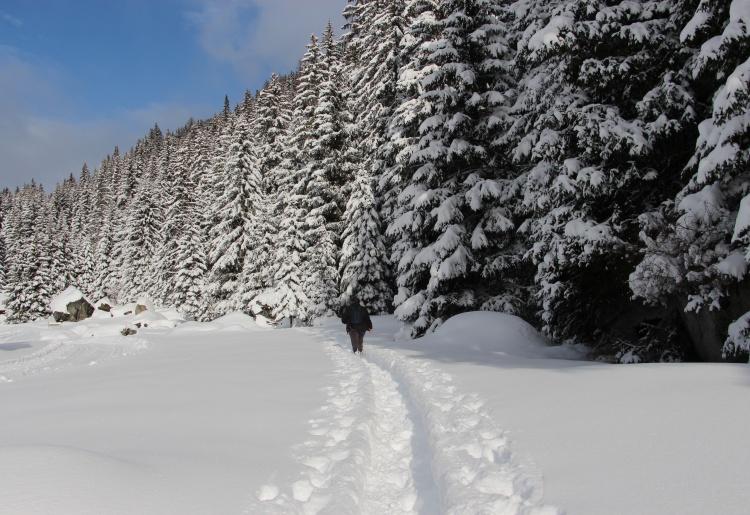 Sentiers raquettes à Pralong - Val des Dix