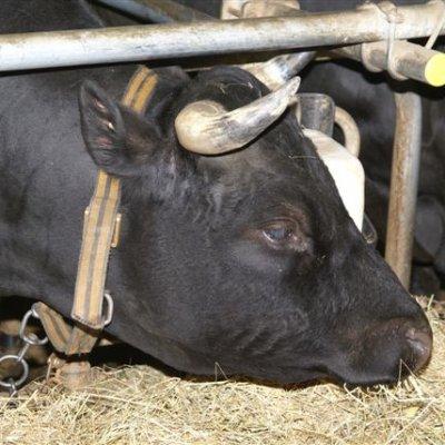 Farm visit in Euseigne