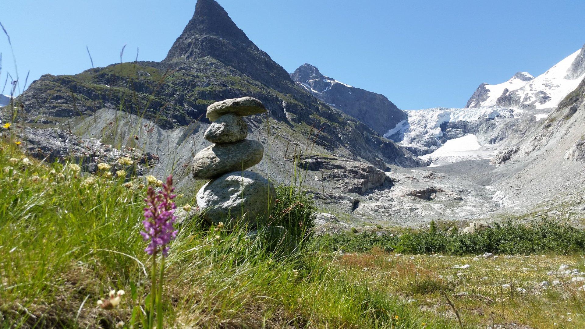Vallon de Ferpècle: Gletscher und Pflanzen