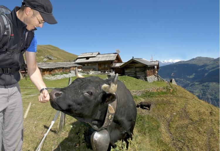 Agritourisme & Race d'Hérens